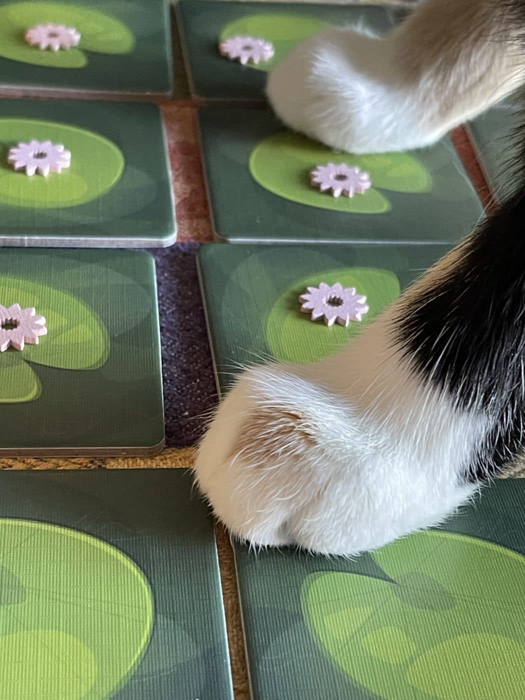Lily cat stepping on the game tiles